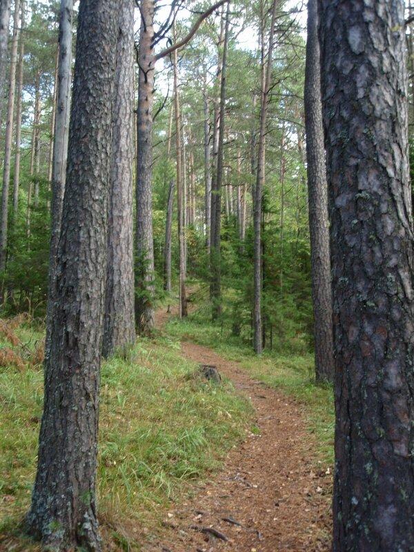 Тропинка в заповедном лесе