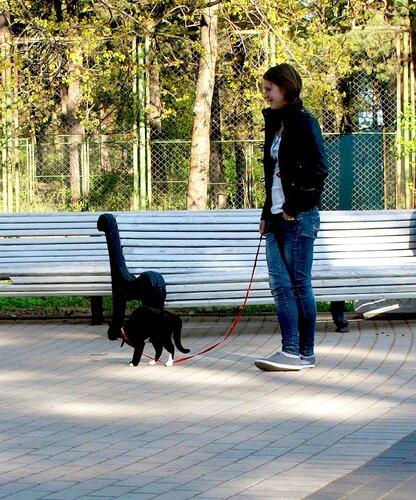 Прогулка черного кота на поводке