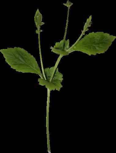 «Day Rose» 0_98201_7ede0e48_L