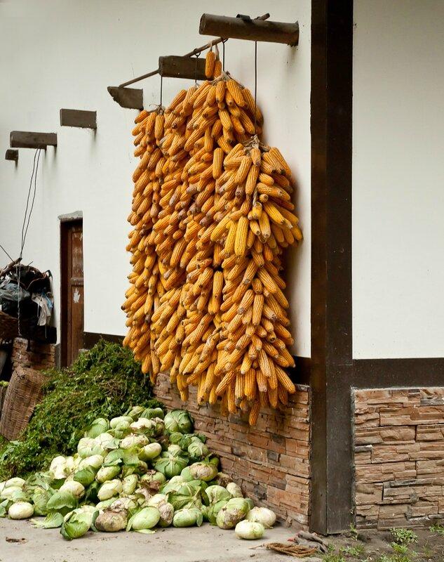 Вязанки кукурузы