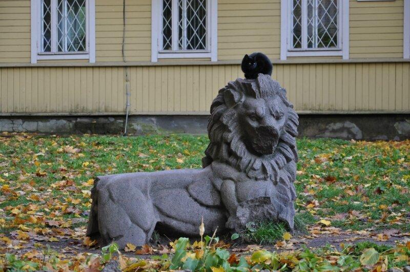 Выборгские коты