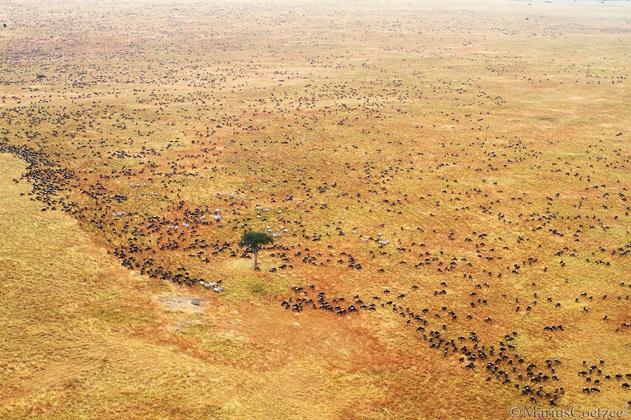 Животный мир Африки. Фотограф Marius Coetzee