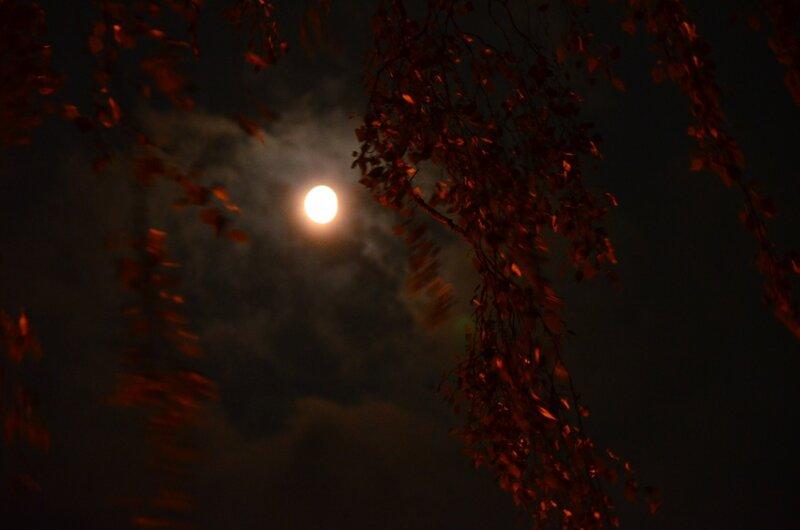 Ночной ветер