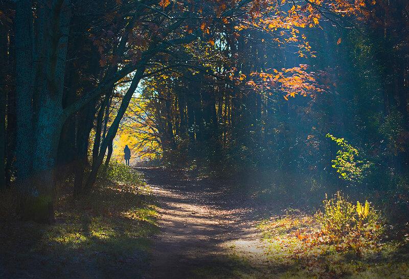 на лесной дорожке