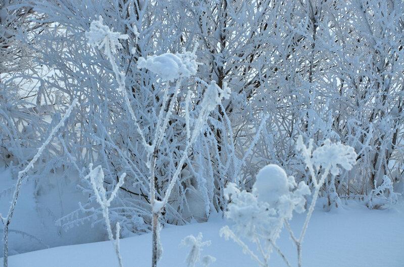 Зима. Мороз