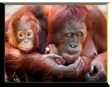 Малайзия. о.Борнео. Фото Janelle Lugge - shutterstock