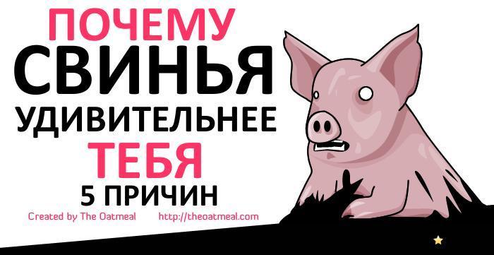 Комикс про свиней