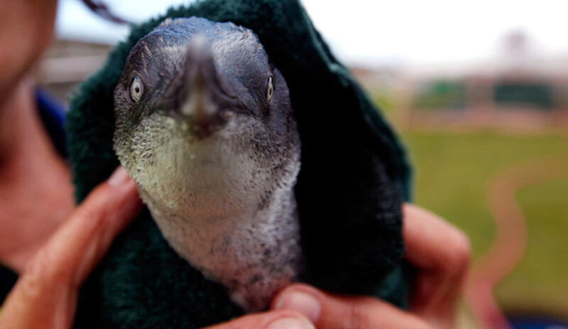 Пингвины в свитерах
