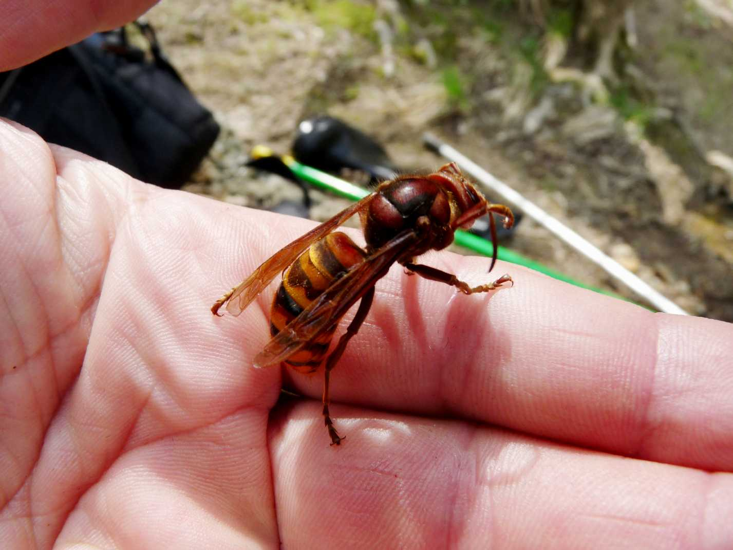 Жалящие насекомые фото 5