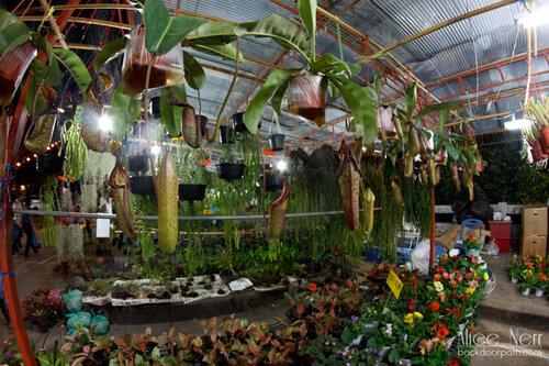 цветочная лавка на рынке в краби-тауне во время лой кратонга