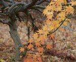 Осень в Орегоне