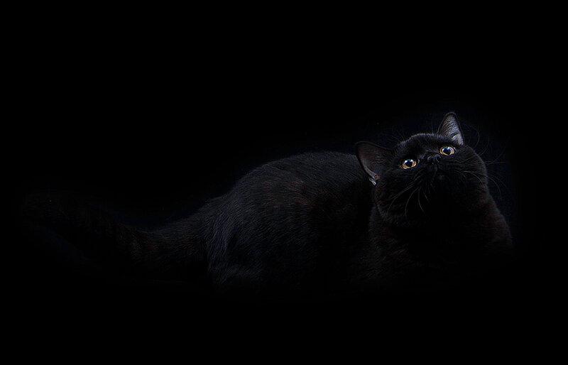 черный кот Брабус