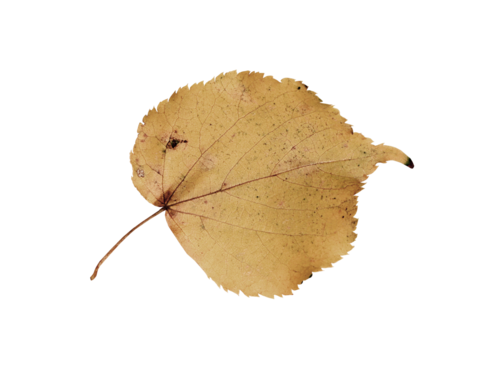 «Autumn Glow» 0_9803e_92720df1_L