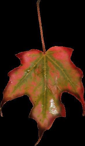 «Autumn Glow» 0_98094_79b2b25f_L