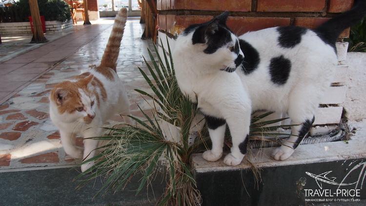 турецкие коты