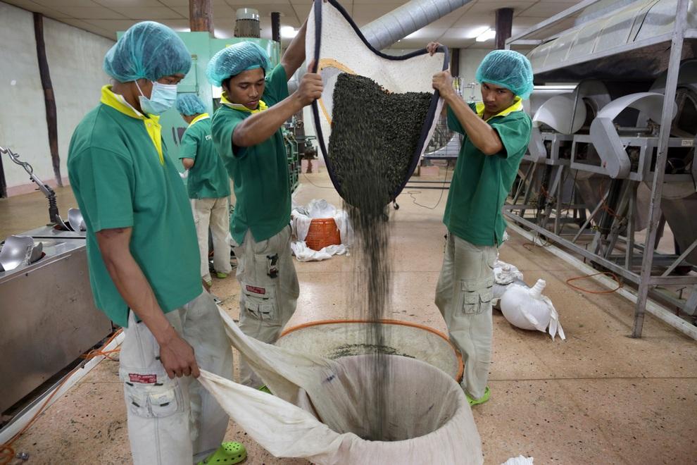 رحلة تصنيع الشاي خطوة بخطوة 0_96e57_b759f6ee_ori