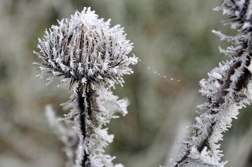 Нежное дыхание зимы