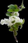 цветы (24).png