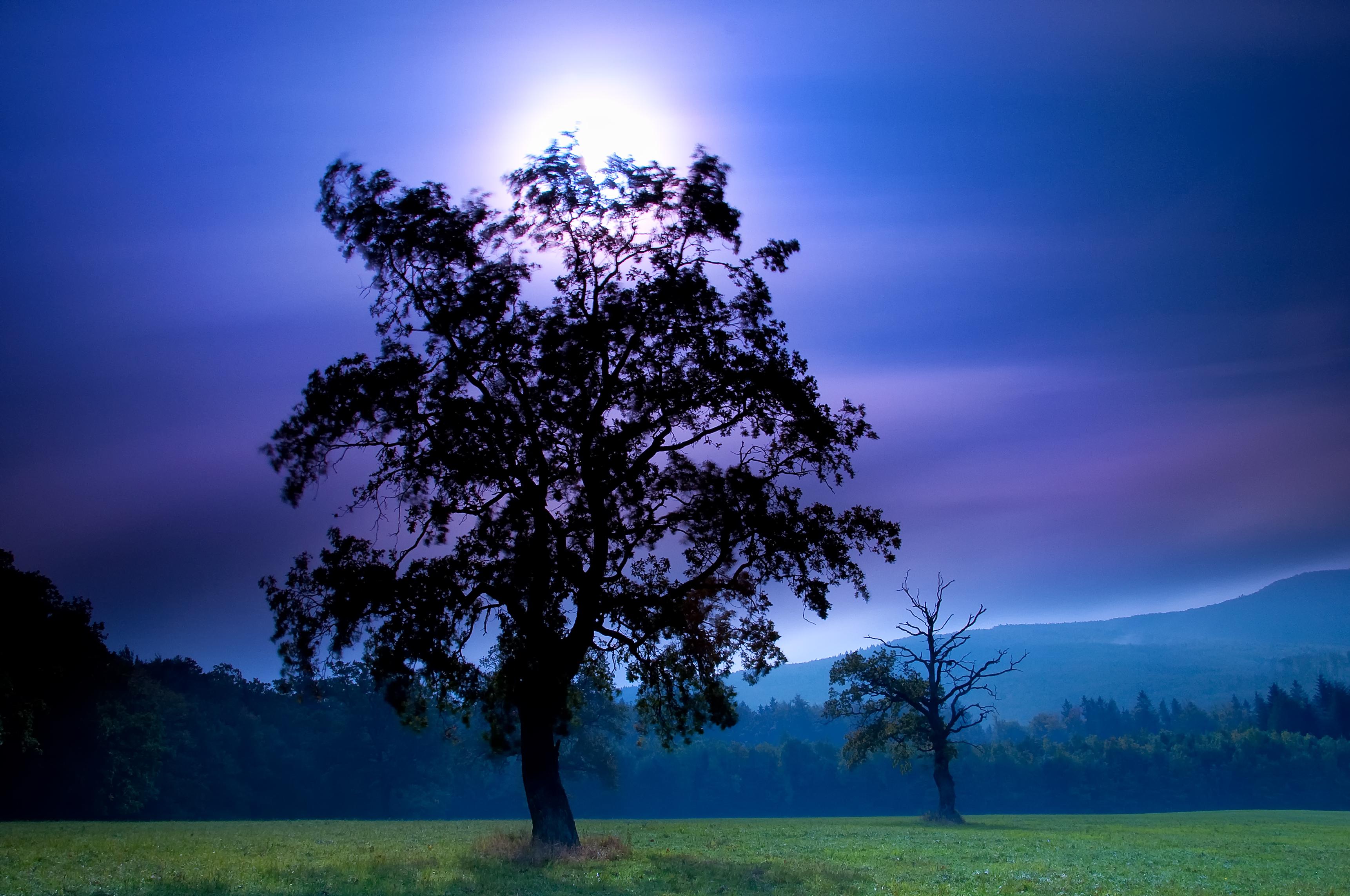 деревья небо солнце загрузить