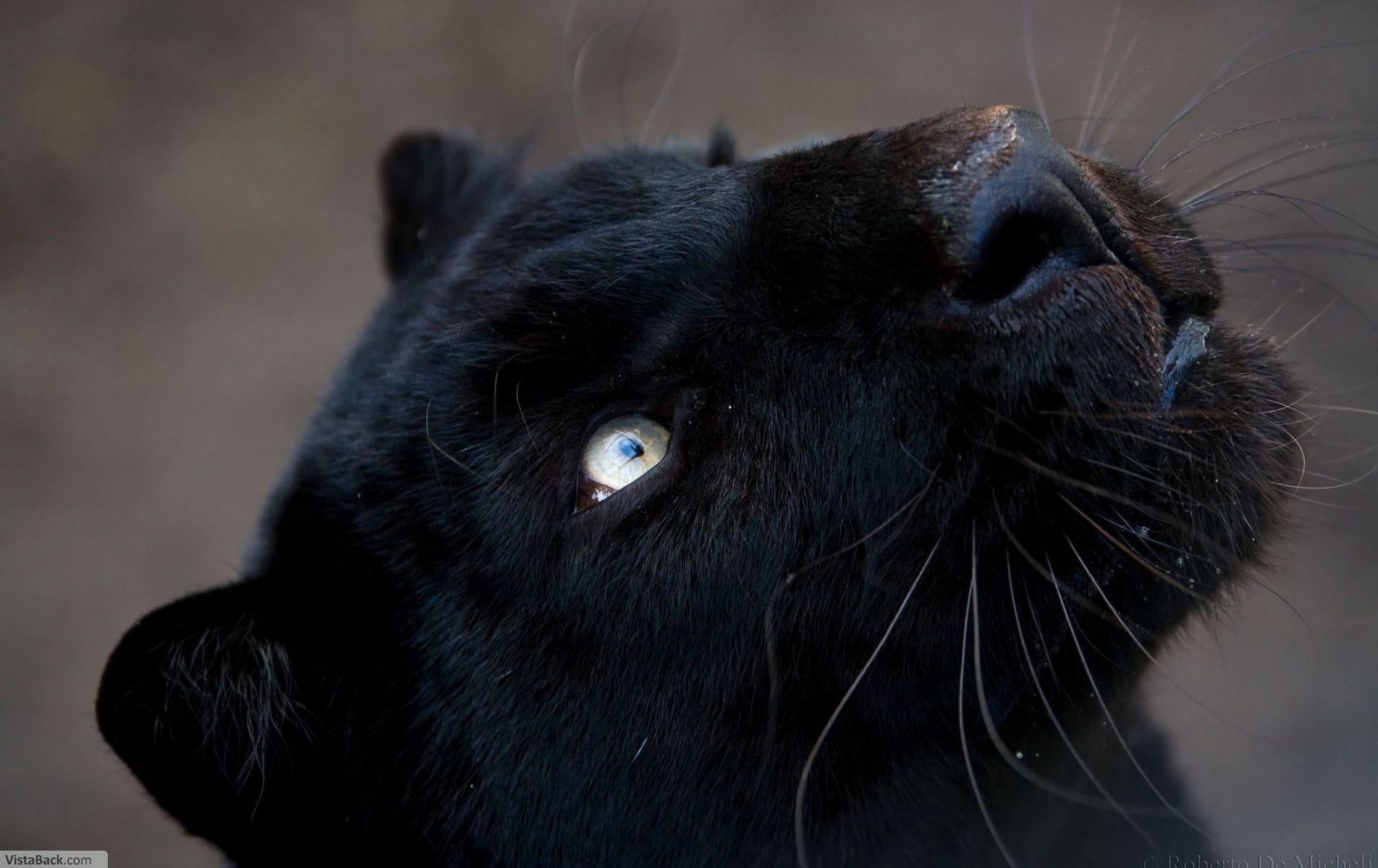 Львов фото красивое