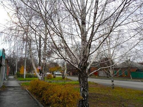 Фотозарисовка Последние дни осени в Ростове