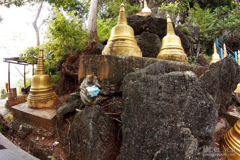 вскрытие обезьяной украденной коробки с соевым молоком, таиланд