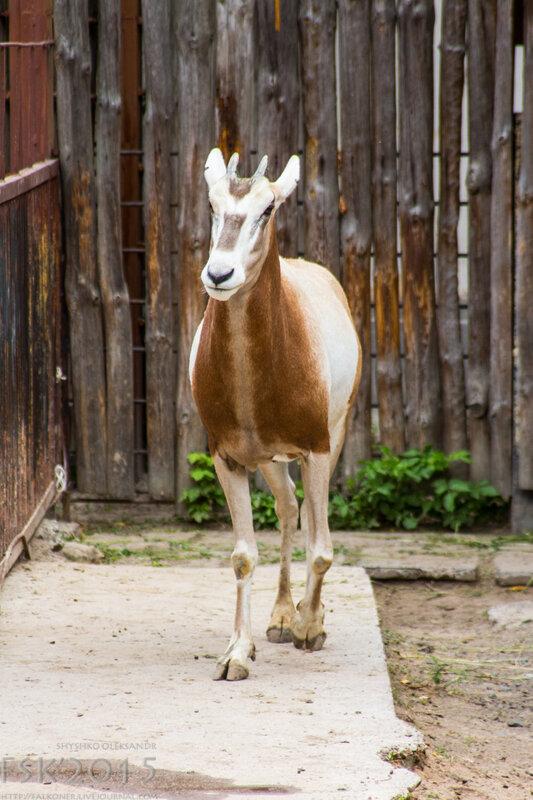 kyiv_zoo-21.jpg