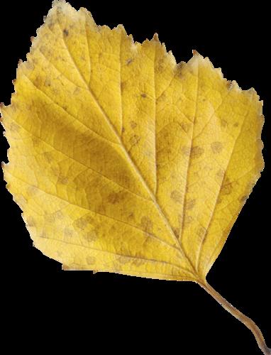 «Autumn Glow» 0_9807b_ec3e481_L