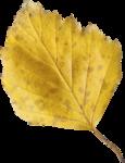emeto_autumn glow_leaf 3.png