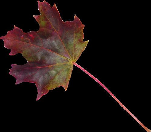 «Autumn Glow» 0_980c4_16f4af9c_L