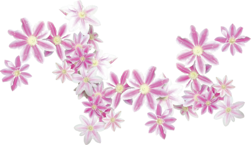 «Day Rose» 0_9820c_7d436ebf_L