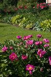 Календарь цветения пионов 2012г 0_6ffdd_94009c71_S