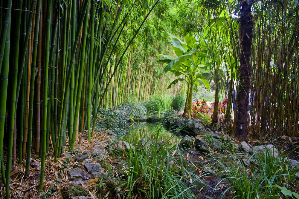 Никитский ботанический сад, Ялта, Крым