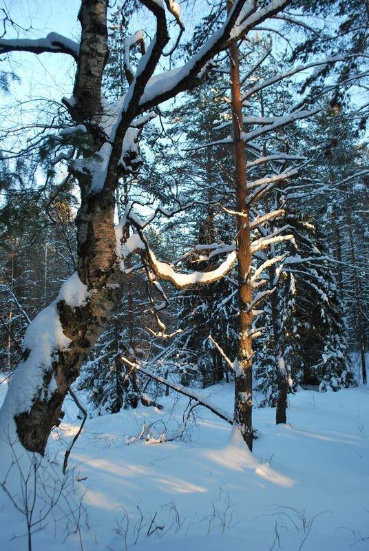 Зима двенадцатого