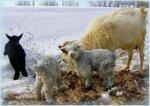 Мама коза и 3 козлёнка.