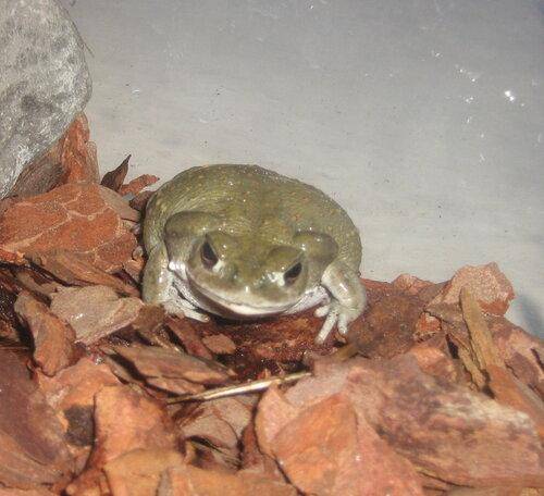 Идиотский вопрос про жаб !  - Страница 2 0_7a8de_3ab7b99b_L