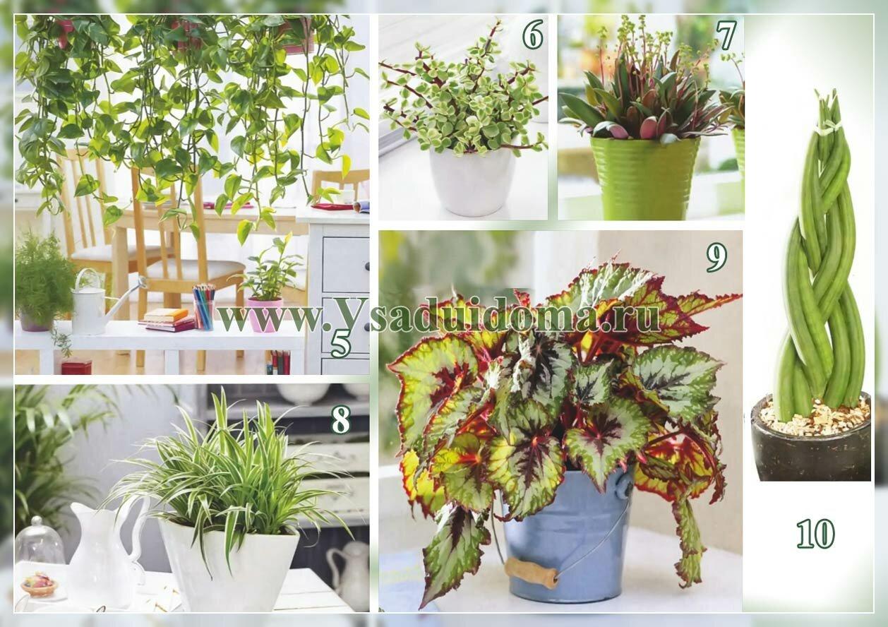 декоративнолистные растения - фото