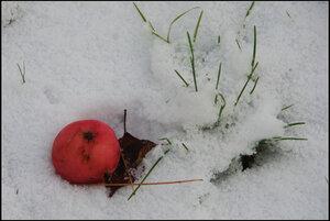 Яблоко на снегу.