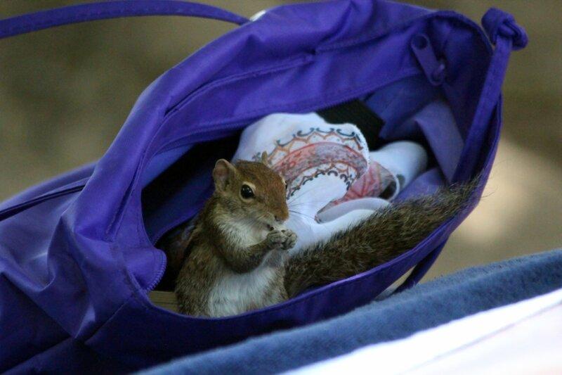 В чужой сумке!:))