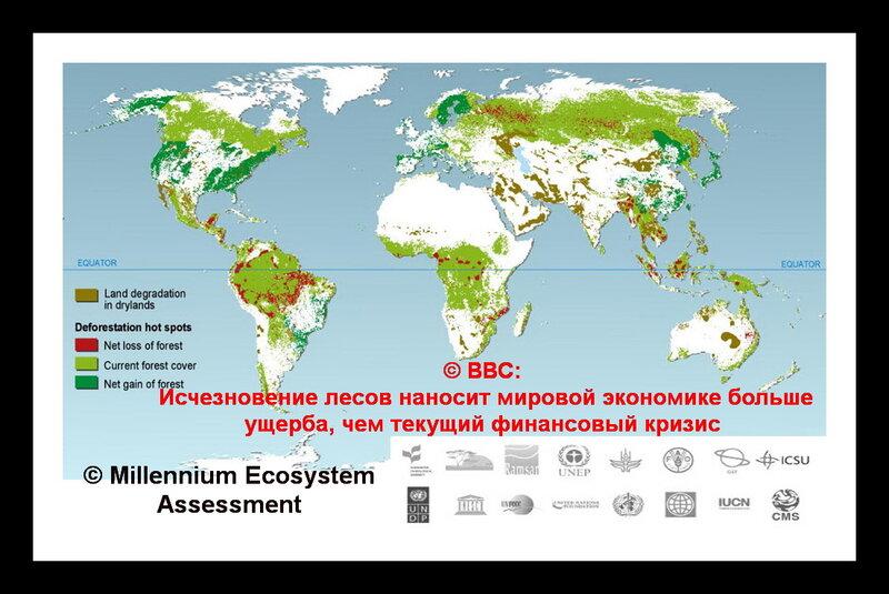 Уничтожение  лесов в мире
