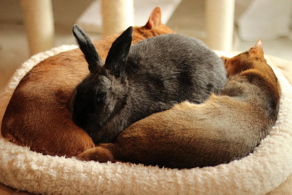 Няшный пост: кролик и коты
