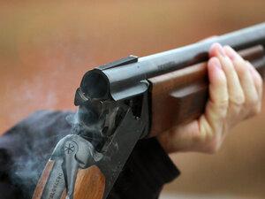 Прокуратура проводит проверку информации об отстреле краснокнижной кабарги на Сахалине