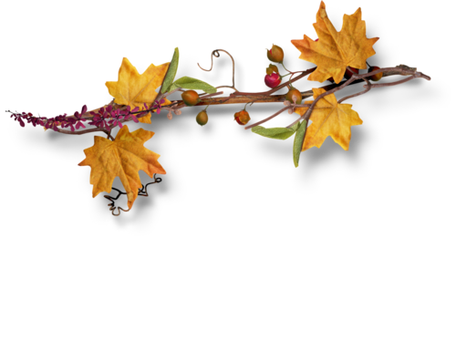Palvinka_AutumnSplendor_cluster1d.png