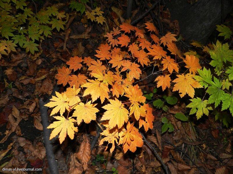 Осенний лес на сопке Холодильник. 19-октября-2012г