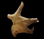 natali_halloween_leaf9.png