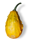 natali_halloween_pumpkin3-sh1.png