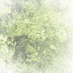 Violette-s_Garden_Cocotounette_p (2).jpg