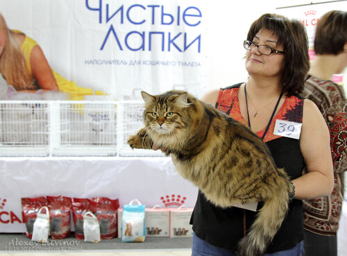 http://img-fotki.yandex.ru/get/6419/135140311.3f/0_944d5_bf904727_L.jpg