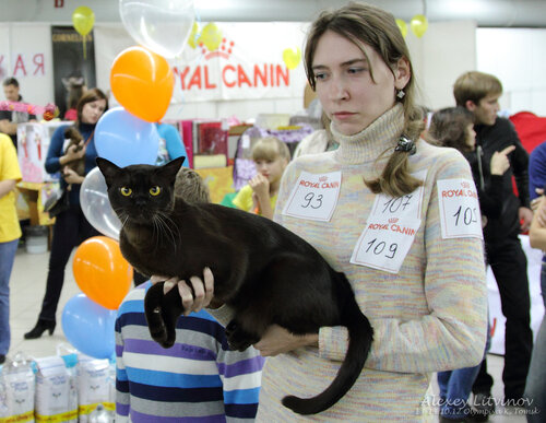 http://img-fotki.yandex.ru/get/6419/135140311.41/0_94612_ccdfbec6_L.jpg