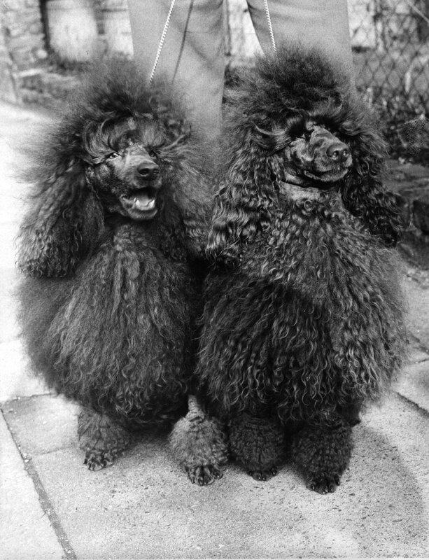 Shaggy Dogs